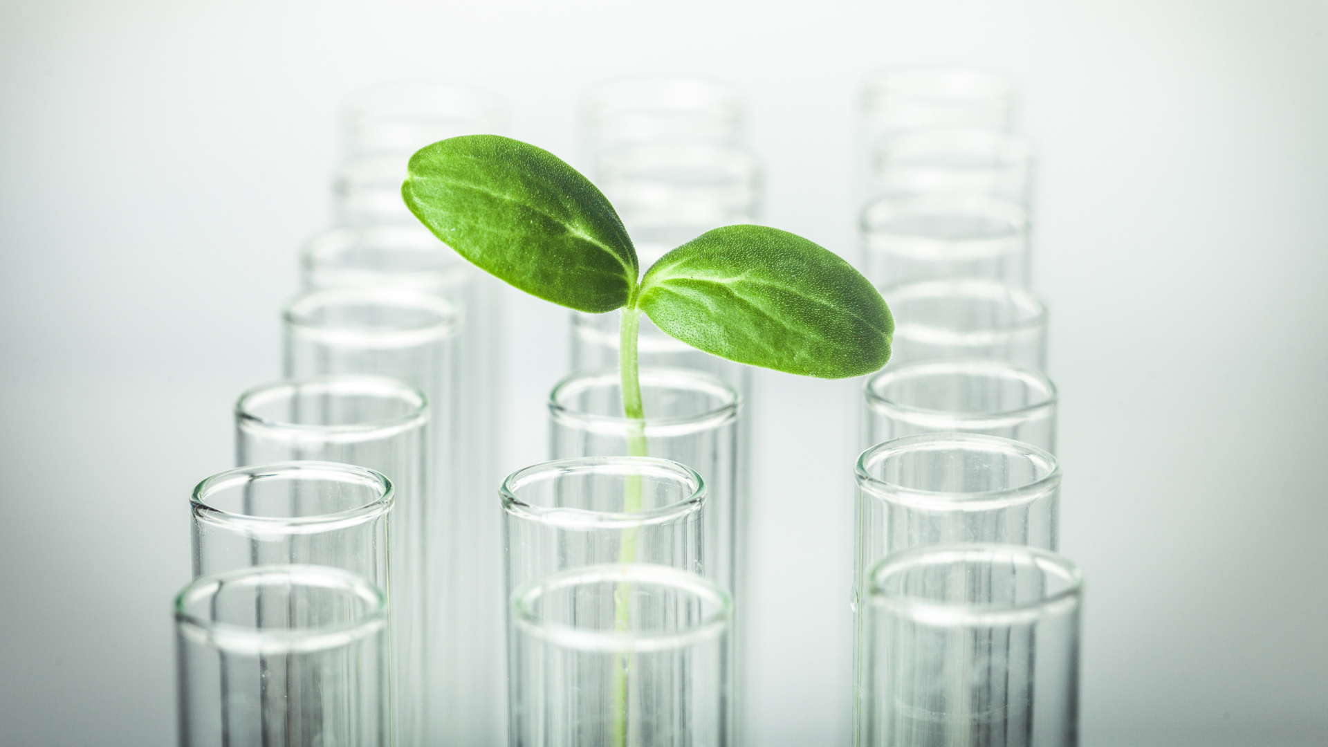 Plant shoot in test tube